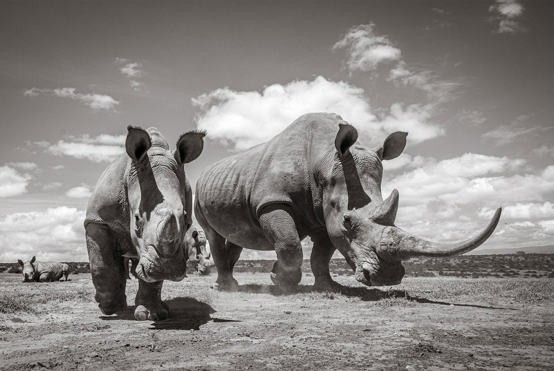 Will Burrard-Lucas - vášnivý fotograf prírody | Sony SK
